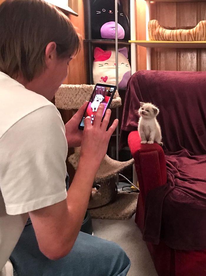 kedi fotoğraf