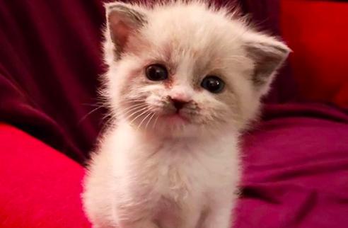 Fenomen kediler Instagram'ı sallıyor