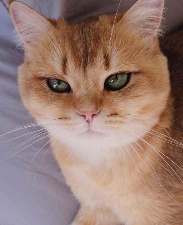 Güzel kedi
