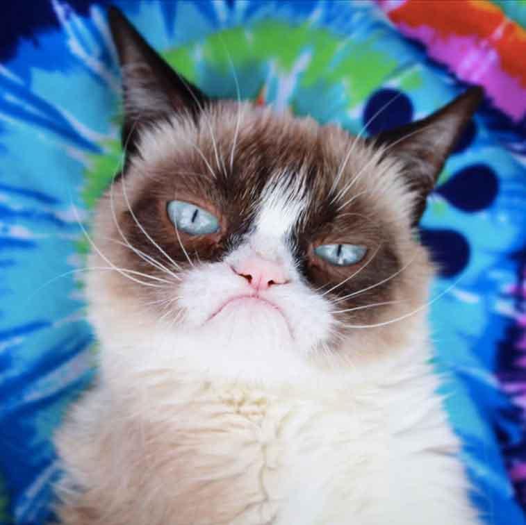 Huysuz suratsız fotojenik kedi