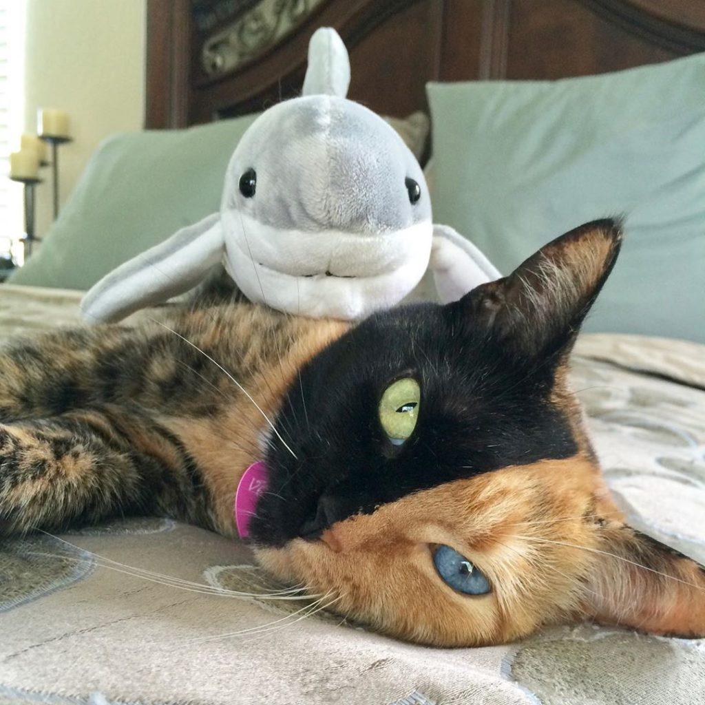 Fenomen kediler Venüs kedi fotojenik