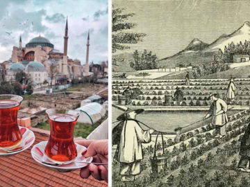 Çay tarihi