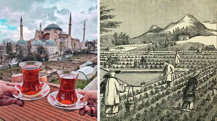 Türk milletinin benzini olan çay nasıl keşfedildi ?