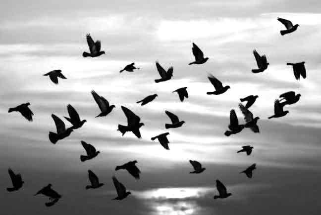 Osmanlı adetleri göçmen kuşlar