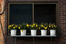 Osmanlı adetleri sarı çiçek