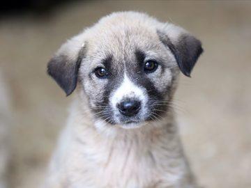hayvan hakları yasası mecliste