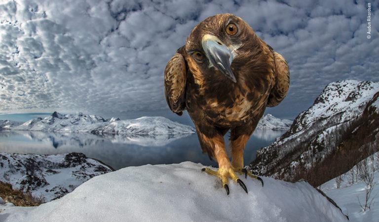 '2019 vahşi yaşam fotoğrafçıları' yarışmasının finalistleri