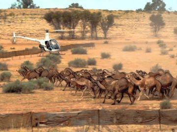 Avustralya develer yangın